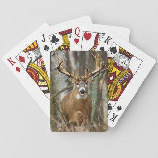 Dollar-Rotwild-Spielkarten Spielkarten