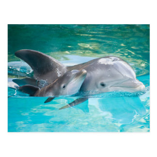Dolphin with calf postkarte