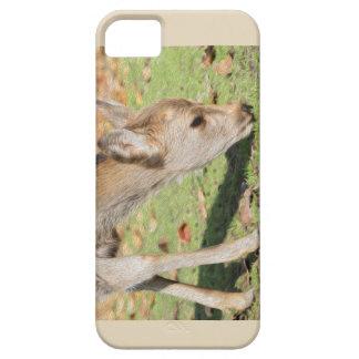 Doreen Telefon-Kasten iPhone 5 Hülle