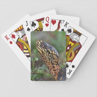 Dosenschildkröte-Spielkarten Spielkarten