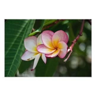 Double copie de photo de fleur de Frangipani