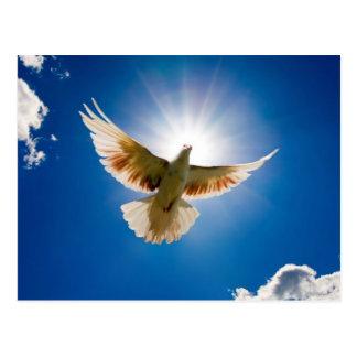 Dove in the sun postkarte