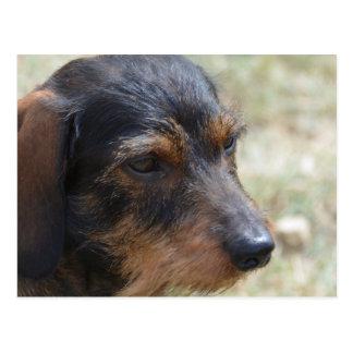 Draht behaarter Daschund Hund Postkarte