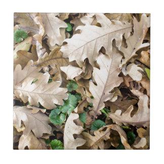 Draufsicht des gefallenen Eichen-Blätter Kleine Quadratische Fliese