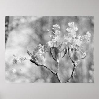Drei Blumen am Baum Poster