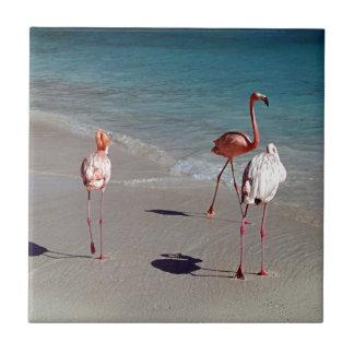 Drei Flamingos von Aruba Keramikfliese