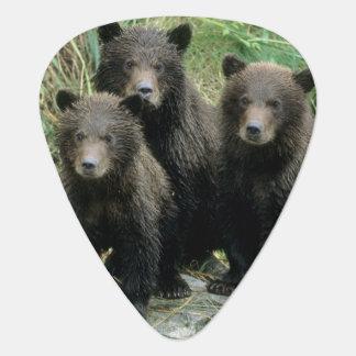 Drei Grizzlybär CUB oder Coys (CUB von Plektron