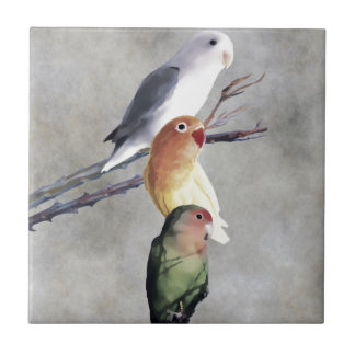 Drei hübsche Lovebirds Fliese