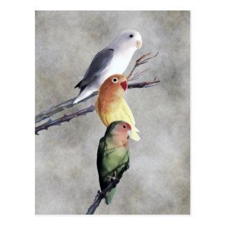 Drei hübsche Lovebirds Postkarte
