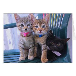 Drei Kätzchen Karte