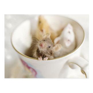 Drei kleine Mäuse, die in der Schale stationieren Postkarte