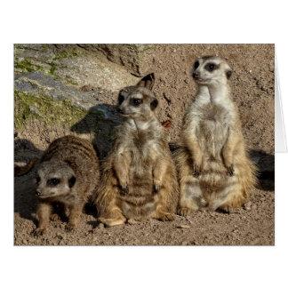 Drei meerkats karte