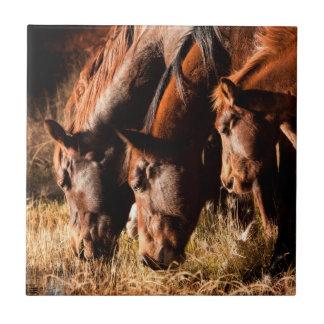 Drei Pferde, die im düsteren Licht trinken Keramikfliese