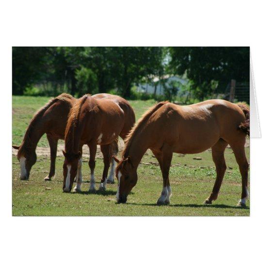 Drei Pferde Grußkarte