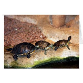 Drei Schildkröten in Folge Karte