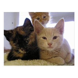 Drei Schutz-Kätzchen Postkarte