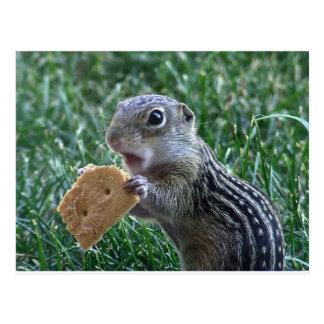 Dreizehn-Gesäumtes Grundeichhörnchen Postkarte