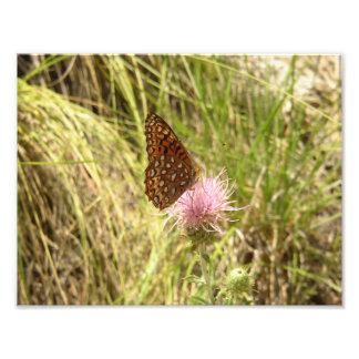 Druck-Kunst-Foto-Schmetterling und Wildblume Foto