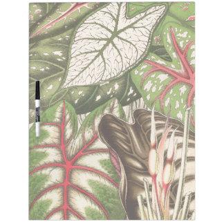 Dschungel verlässt Regen-Waldcaladium-Blatt Trockenlöschtafel