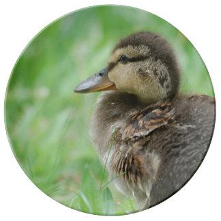 Duckling Entenküken ~ Foto Jean-Louis Glineur Teller