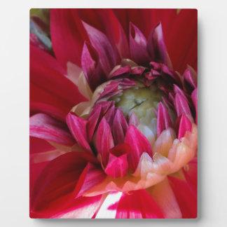 dunkelrote Blüte Fotoplatte