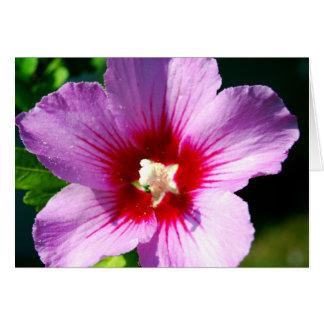 Dunkle lila Rose von Sharon Karte
