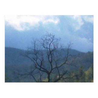 dunkler Baum stürmische skys Postkarte
