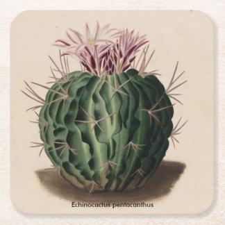 Echinocactus pentacanthus Kaktus Kartonuntersetzer Quadrat