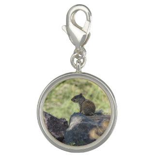 Écureuil de roche de bébé breloques
