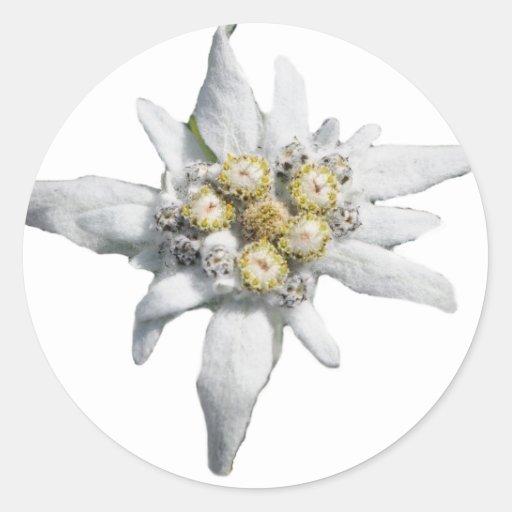 Edelweiss Adhésifs Ronds