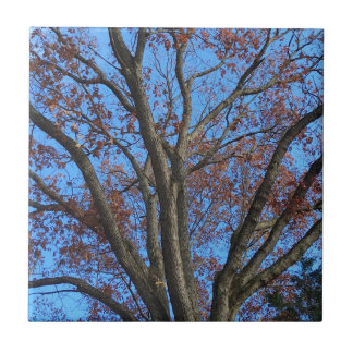 Eiche in einem blauen Herbst-Himmel - Kleine Quadratische Fliese