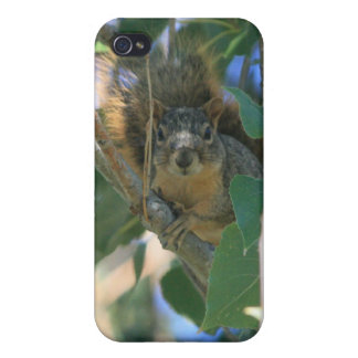 Eichhörnchen 3 4/4s iPhone 4 etui