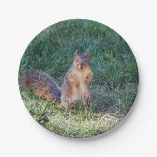 Eichhörnchen 95 pappteller