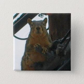Eichhörnchen auf einem Polen in Colorado Quadratischer Button 5,1 Cm