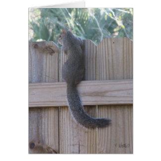 Eichhörnchen auf einem Zaun Karte