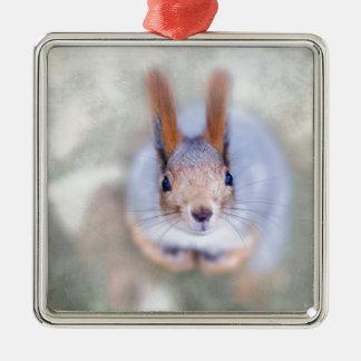 Eichhörnchen betrachtet Sie von unten nach oben Quadratisches Silberfarbenes Ornament