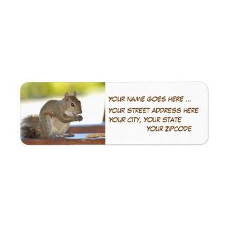 Eichhörnchen, das Erdnüsse