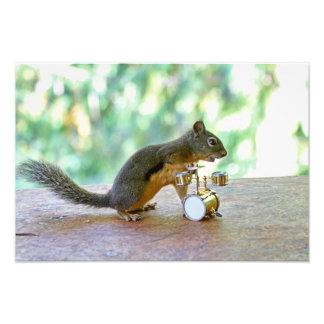 Eichhörnchen, das Trommeln spielt Foto Druck