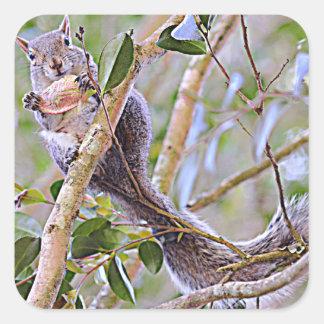 Eichhörnchen-Grau (Kentucky und North Carolina) Quadratischer Aufkleber