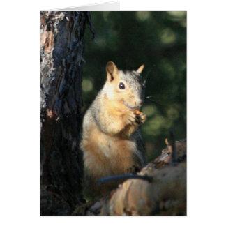 Eichhörnchen Karte