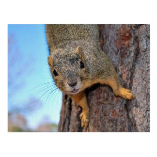 Eichhörnchen! Postkarte