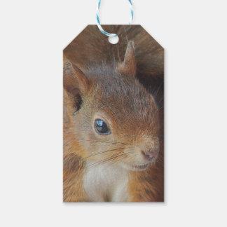 Eichhörnchen Squirrel / Foto: Jean-Louis Glineur Geschenkanhänger