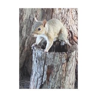 Eichhörnchentier-Kunstdruck Leinwanddruck