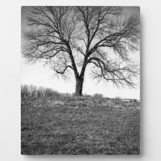 Ein Baum Fotoplatte