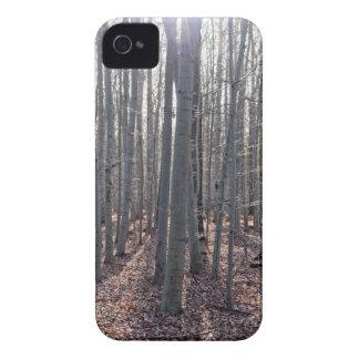 Ein Buchenwald im Fall Case-Mate iPhone 4 Hüllen