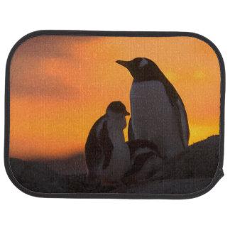 Ein gentoo Pinguinerwachsener und -küken werden Automatte