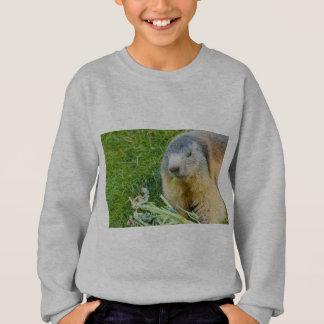 ein geselliges Murmeltier auf Sweatshirt