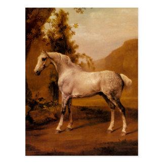 Ein grauer Stallion in einer Landschaft durch Postkarte