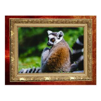 Ein junger Lemur, Tierphotographie Postkarte