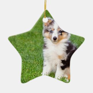 Ein junger sheltie Hund, der auf Gras sitzt Keramik Ornament